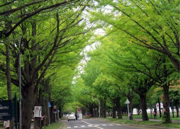 1011-hoku-ichou.jpg