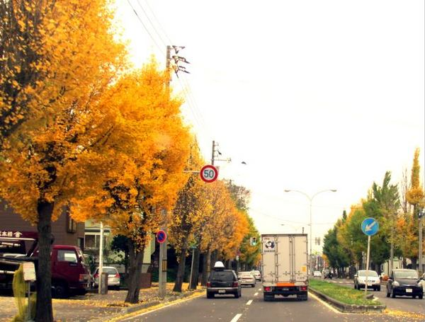 1105-ichou-2.jpg