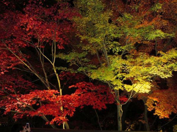 1128-kouyou-3.jpg