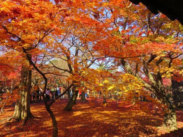 1130-touhukuji-13.jpg