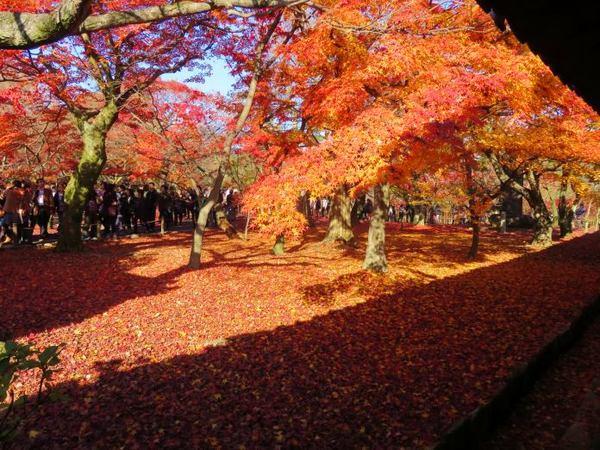 1130-touhukuji-14.jpg