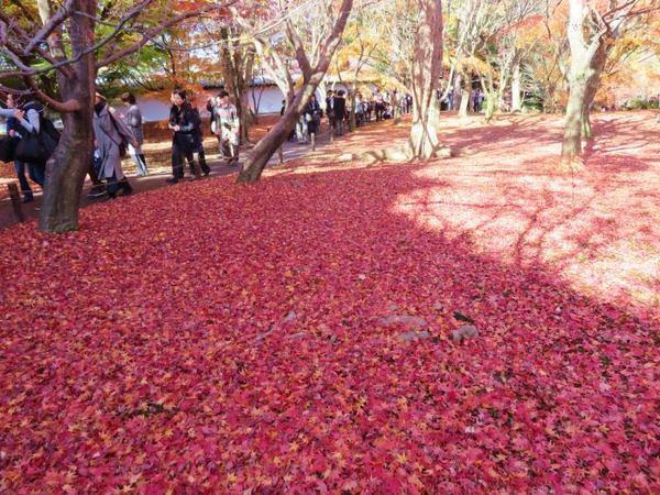 1130-touhukuji-2.jpg