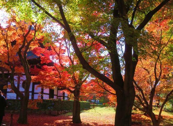 1130-touhukuji-5.jpg