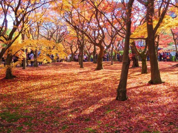 1130-touhukuji-6.jpg