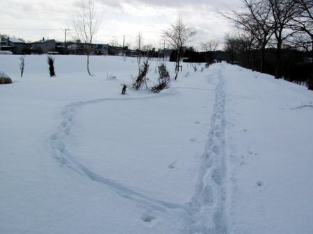124-ski-asi.jpg