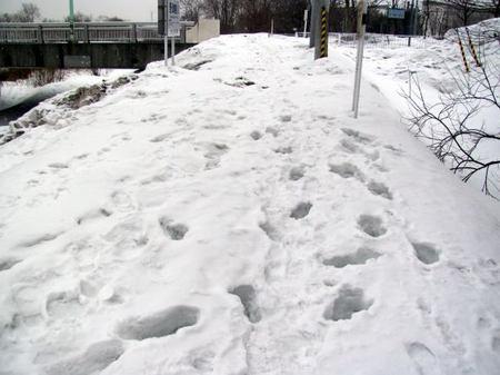 315-yukimichi.jpg