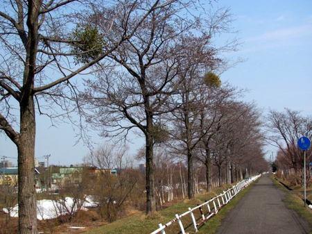 414-jitennshamichi.jpg