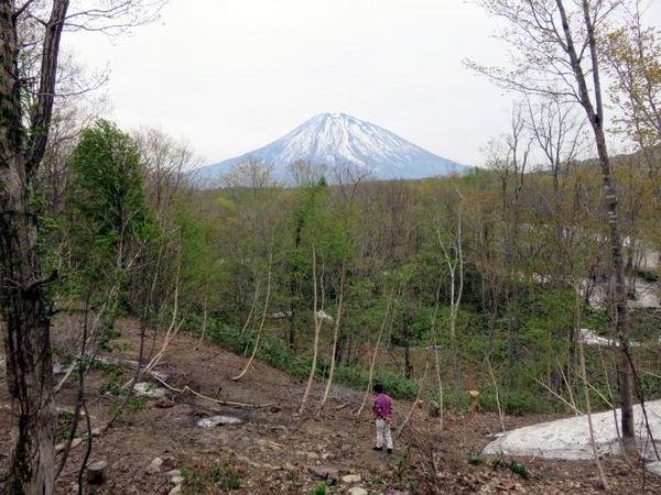 512-youtei-niwa.jpg
