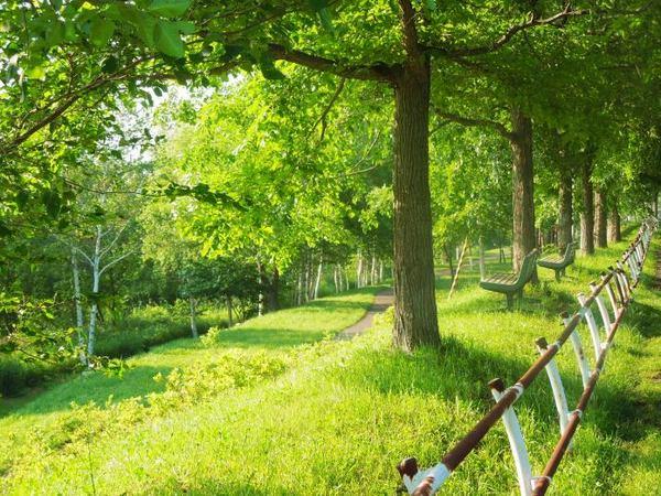704-green.jpg
