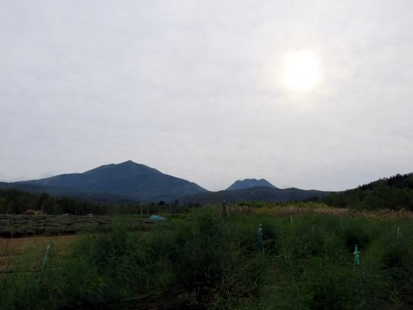 903-ann-iwa0.jpg