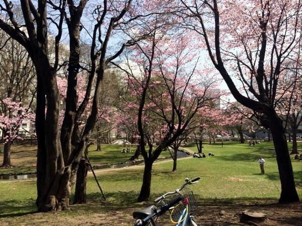 sakura-hokudai-2.jpg