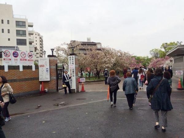 sakura-iriguchi.jpg