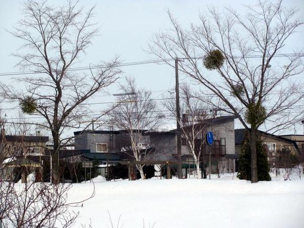 316-yadorigi-up.jpg